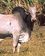 Ζέμπου