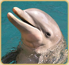 Delfīns