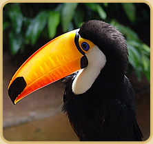 Toucan  =  Tucan